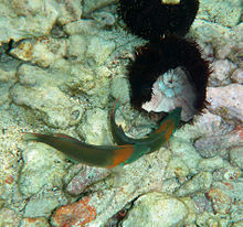 Photo of black spiny animal next to fish whose head is embedded in animal