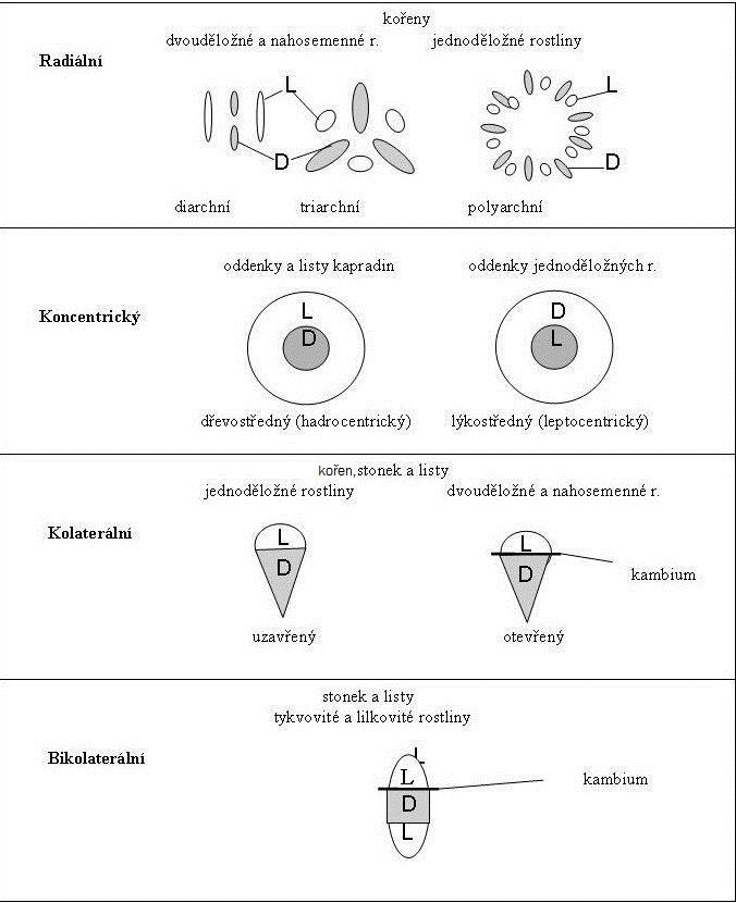 Typy cévních svazku.jpg