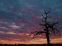 Visalia Sunset