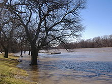 A river out of its banks and flowing around a tree at its edge