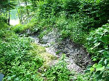 Photo of woodland stream with oyster shells covering the streambed