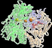 XanthineOxidase-1FIQ.png