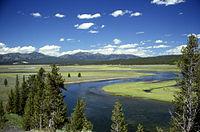 La rivière Yellowstone dans la caldeira.