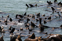 Sea lions at Moss Landing, California