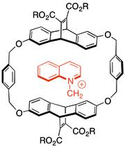 Cyclophane host-guest complex