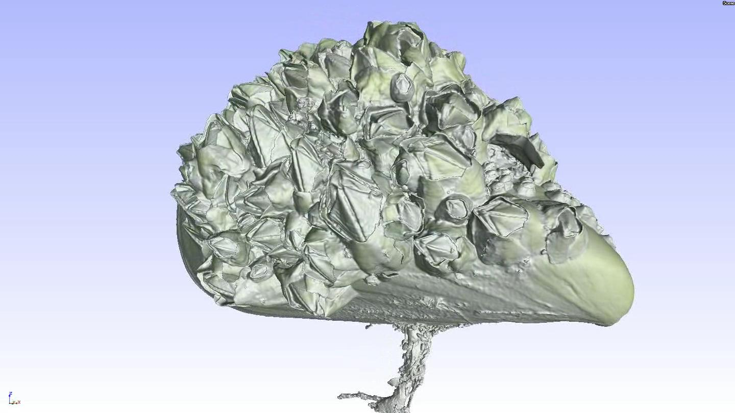 3D flight around a µCT scan of a Mytilus covered with Balanidae.ogg
