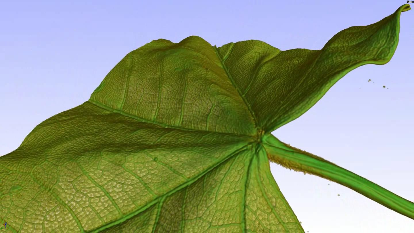 3D rendering of a micro CT scan of a piece of dried leaf..ogg