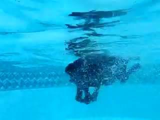 Labrador Retriever in Water.ogv