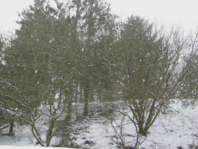 Snowing video samye ling 1.ogg