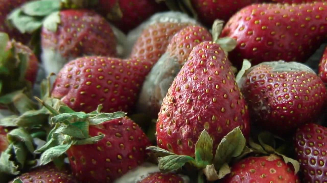 Strawberries time-lapse.ogv